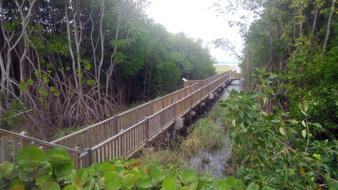 Mangrove in Le Moule centre, Guadeloupe