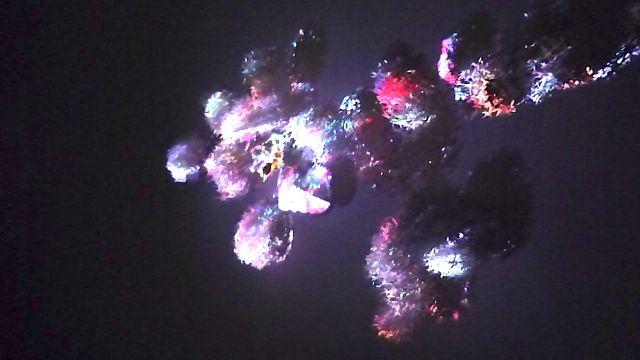 Vidéo sur coraux....Oeuvre de David Gumbs, réalisée à L'Artocarpe lors de sa résidence. Assistance: Leah