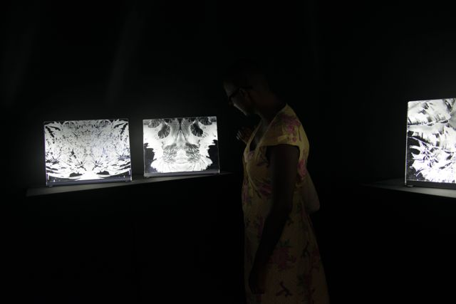 Visite de l'exposition de David Gumbs